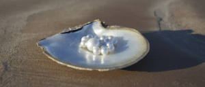 pearls on shell on beach sand
