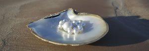 pearls on half shell beach