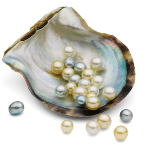Australian pearls in shell of oyster