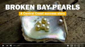 australian pearls, pearl farm, sydney pearl farm